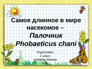 Самое длинное в мире насекомое – Палочник Phobaeticus chani Подготовил: 1 кла