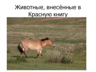 Животные, внесённые в Красную книгу Лошадь Пржевальского