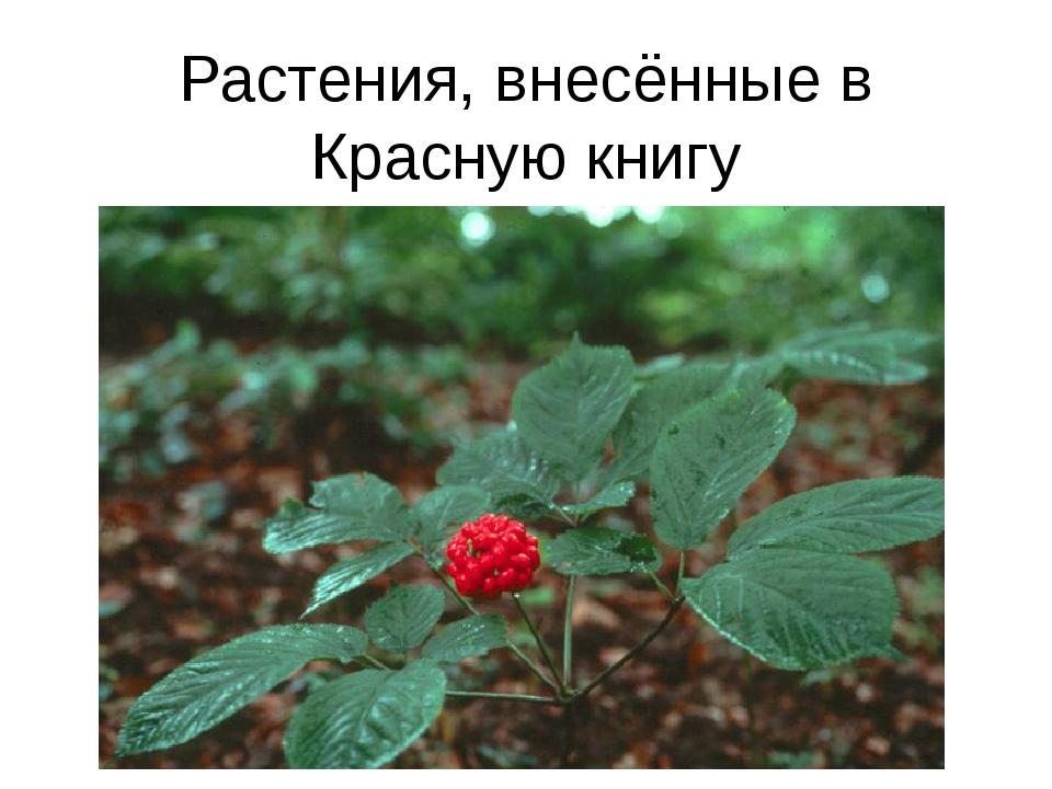 Растения, внесённые в Красную книгу Женьшень