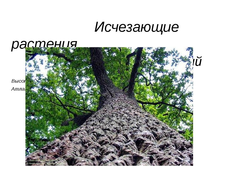 Исчезающие растения Дуб скальный Высота до 30 м. Вид – реликтовый. Распростр...