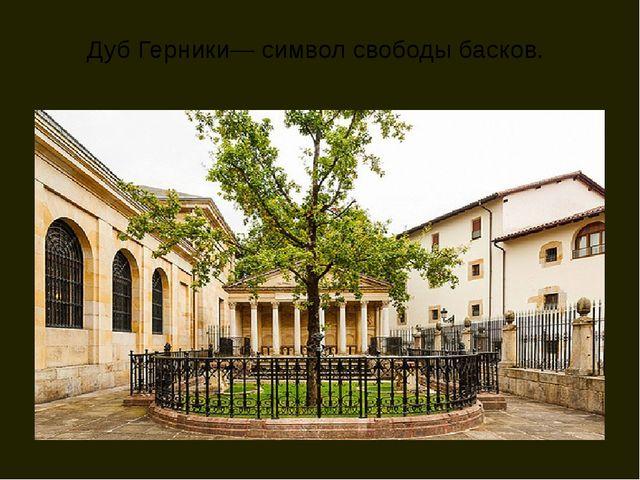 Дуб Герники— символ свободы басков.