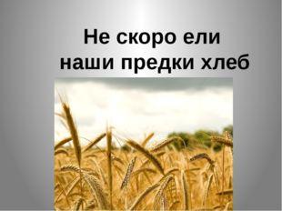 Не скоро ели наши предки хлеб