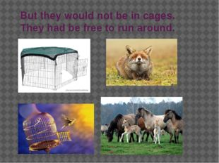But they would not be in cages. They had be free to run around.