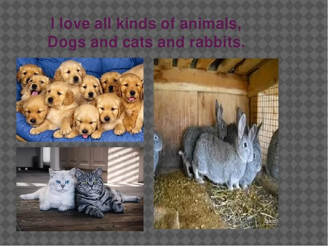I love all kinds of animals, Dogs and cats and rabbits.