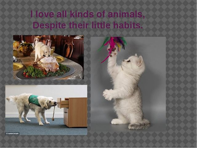 I love all kinds of animals, Despite their little habits.