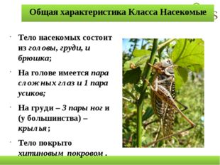 Общая характеристика Класса Насекомые Тело насекомых состоит из головы, груди