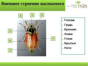Внешнее строение насекомого Голова Грудь Брюшко Усики Глаза Крылья Ноги 7 2 6