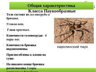 Общая характеристика Класса Паукообразные Тело состоит из головогруди и брюшк
