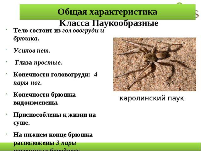 Общая характеристика Класса Паукообразные Тело состоит из головогруди и брюшк...