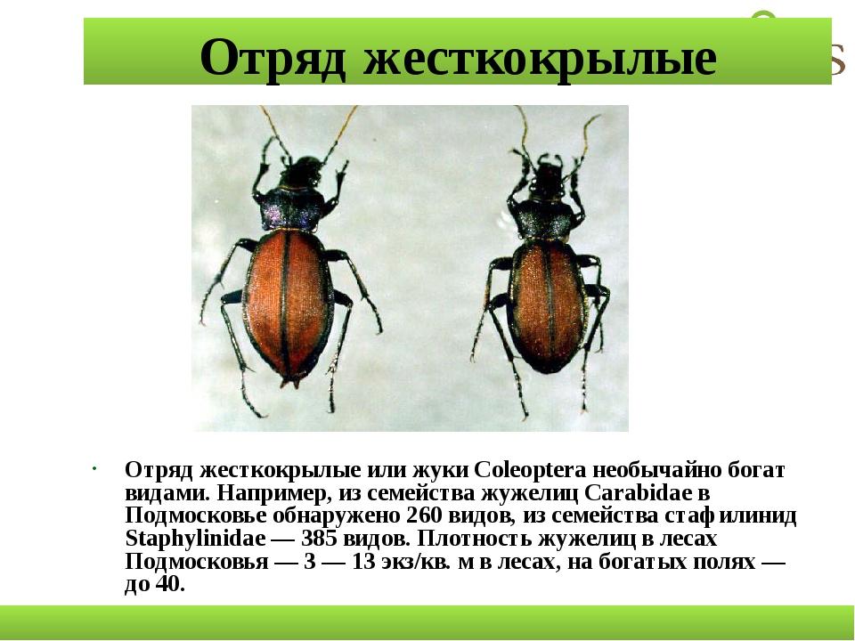 Отряд жесткокрылые Отряд жесткокрылые или жуки Coleoptera необычайно богат ви...