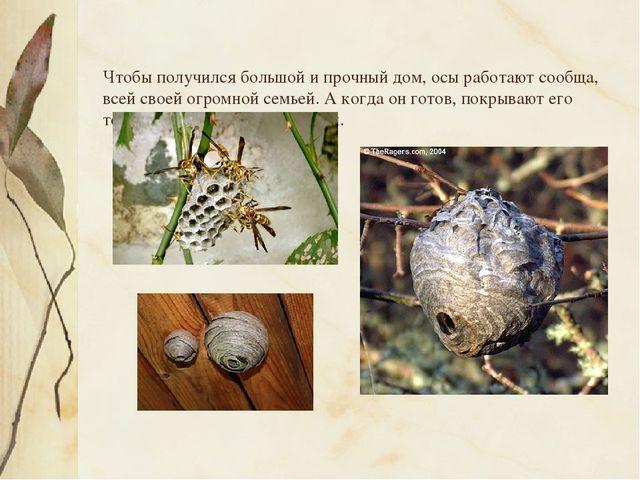 Чтобы получился большой и прочный дом, осы работают сообща, всей своей огром...