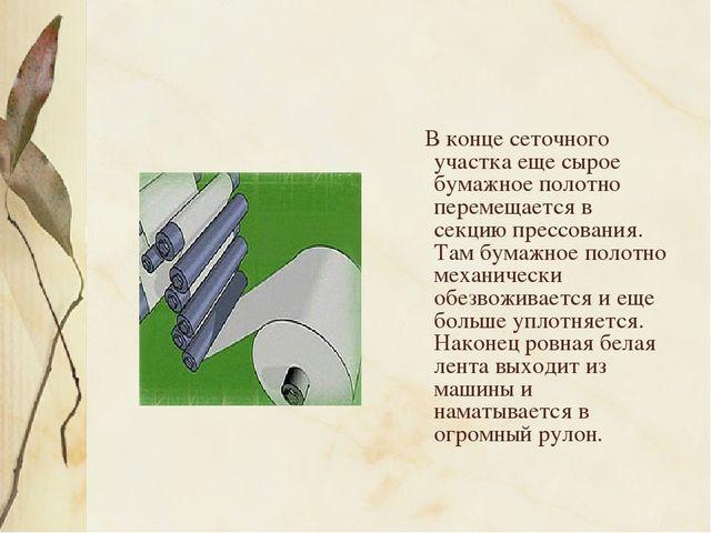 В конце сеточного участка еще сырое бумажное полотно перемещается в секцию п...