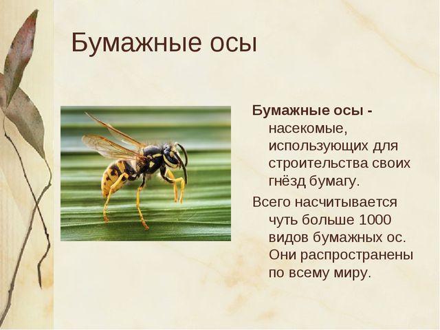 Бумажные осы Бумажные осы - насекомые, использующих для строительства своих г...