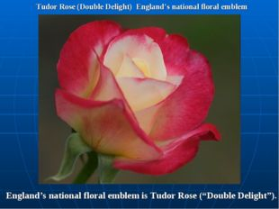 Tudor Rose (Double Delight) England's national floral emblem England's nation