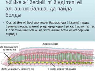 Жүйке жүйесінің түйінді типі ең алғаш шұбалшаңда пайда болды Осы жүйке жүйесі