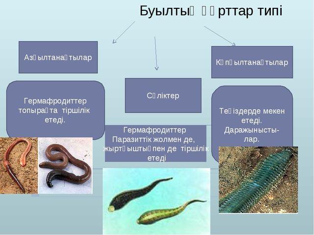 Буылтық құрттар типі Азқылтанақтылар Сүліктер Көпқылтанақтылар Гермафродиттер...