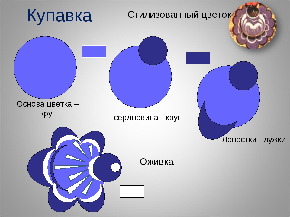 Купавка Стилизованный цветок Основа цветка – круг сердцевина - круг Оживка Ле...