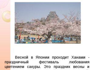 Весной в Японии проходит Ханами - праздничный фестиваль любования цветением