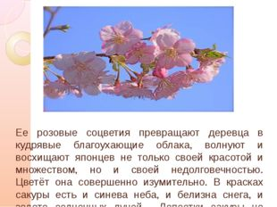 Ее розовые соцветия превращают деревца в кудрявые благоухающие облака, волну