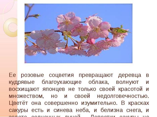 Ее розовые соцветия превращают деревца в кудрявые благоухающие облака, волну...