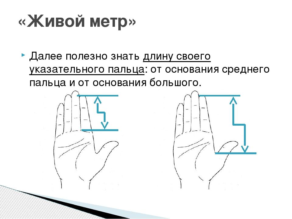 «Живой метр» Далее полезно знатьдлину своего указательного пальца: от основа...