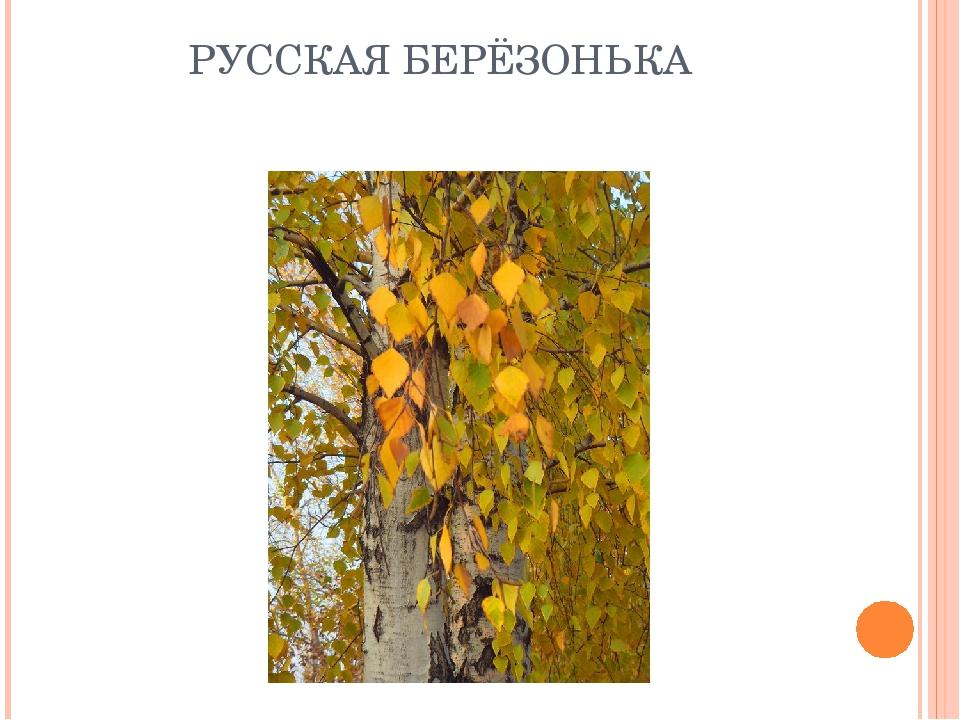 РУССКАЯ БЕРЁЗОНЬКА