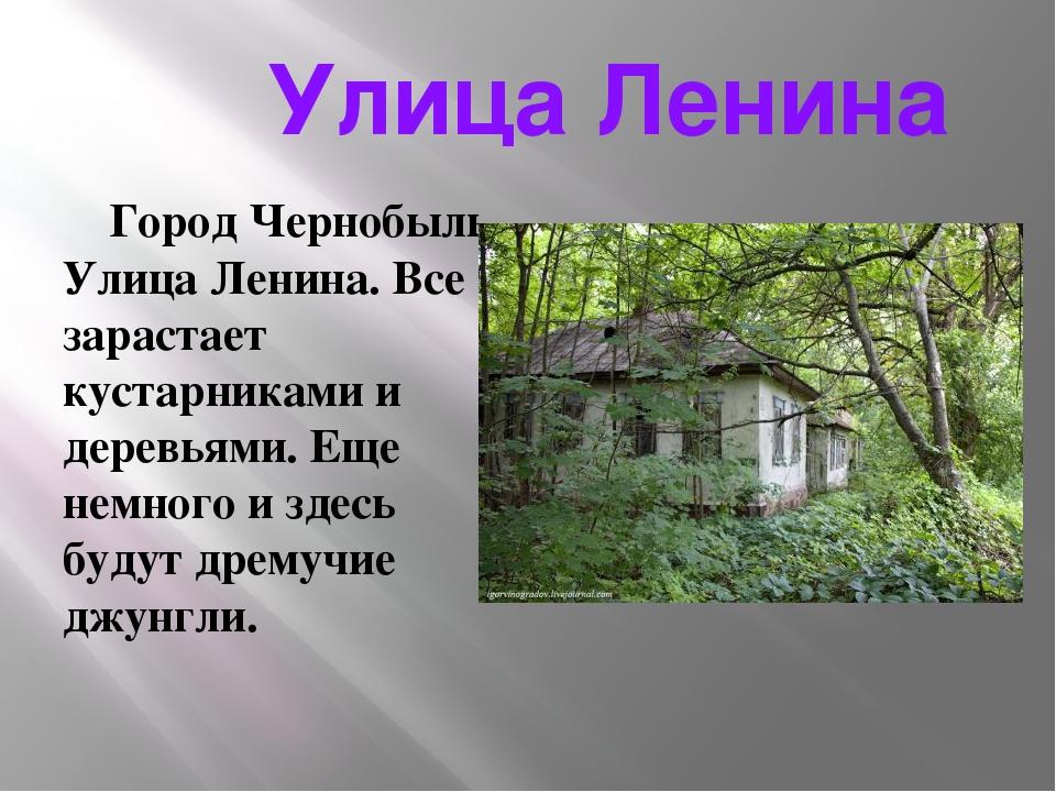 Улица Ленина Город Чернобыль. Улица Ленина. Все зарастает кустарниками и дер...