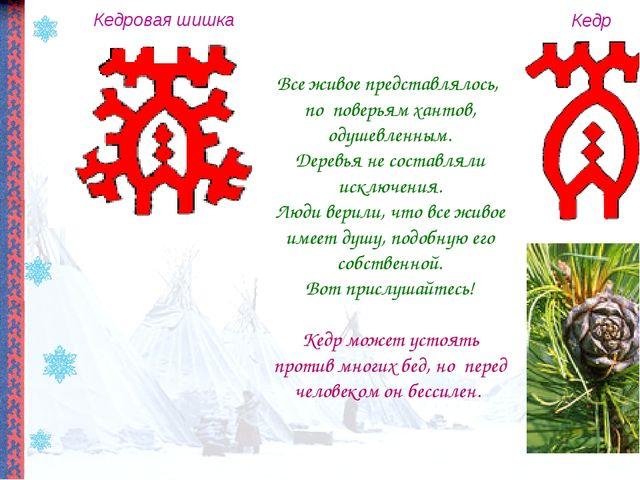 Кедровая шишка Кедр Все живое представлялось, по поверьям хантов, одушевленны...