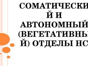 СОМАТИЧЕСКИЙ И АВТОНОМНЫЙ (ВЕГЕТАТИВНЫЙ) ОТДЕЛЫ НС