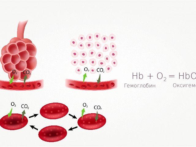 Hb + O2 = HbO2 Оксигемоглобин Гемоглобин