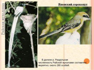 Райская мухоловка В долине р. Раздольная численность Райской мухоловки состав