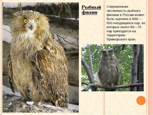 Рыбный филин Современная численность рыбного филина в России может быть оцен...