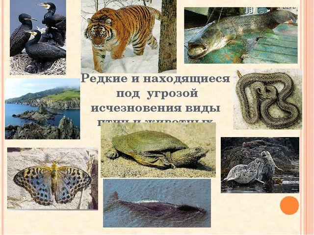 Редкие и находящиеся под угрозой исчезновения виды птиц и животных.