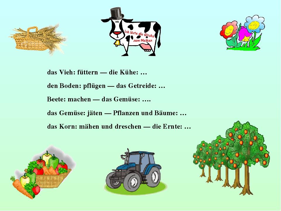 das Vieh: füttern — die Kühe: … den Boden: pflügen — das Getreide: … Beete: m...