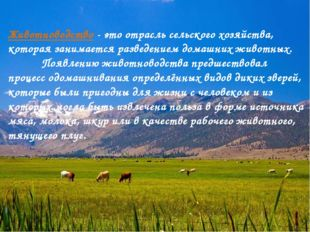 Животноводство - это отрасль сельского хозяйства, которая занимается разведен