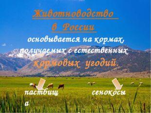 Животноводство в России основывается на кормах, получаемых с естественных кор