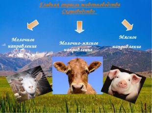 Главная отрасль животноводства Скотоводство Молочное направление Молочно-мясн