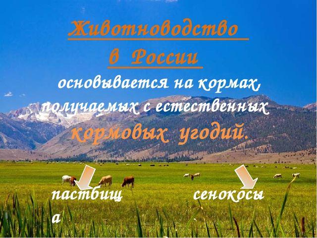 Животноводство в России основывается на кормах, получаемых с естественных кор...