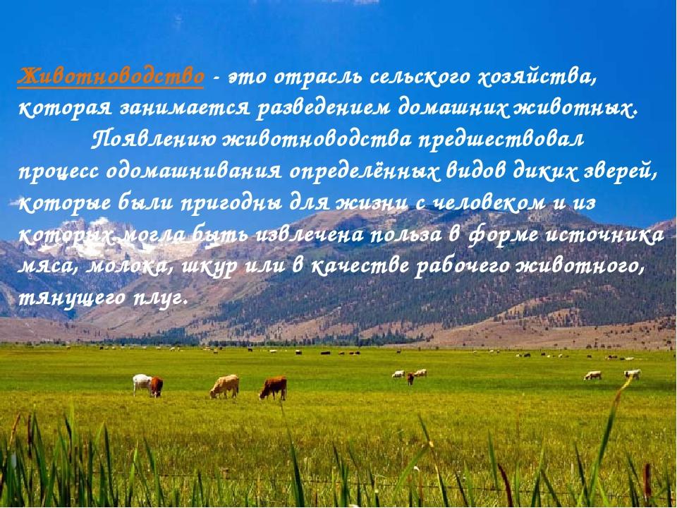Животноводство - это отрасль сельского хозяйства, которая занимается разведен...