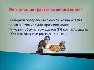 Средняя продолжительность кошек-20 лет. Кошка Пусс из США прожила 36лет. У ко