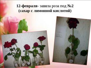 12-февраля- завяла роза под №2 (сахар с лимонной кислотой)