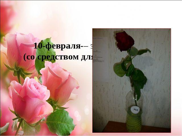 10-февраля-– завяла роза №4 (со средством для мытья посуды)