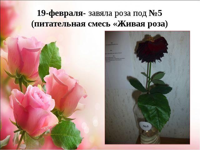 19-февраля- завяла роза под №5 (питательная смесь «Живая роза)