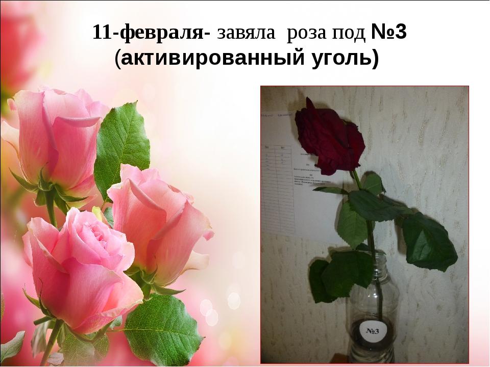 11-февраля- завяла роза под №3 (активированный уголь)