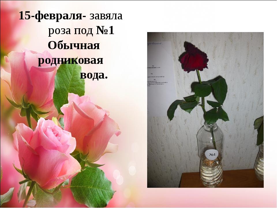 15-февраля- завяла роза под №1 Обычная родниковая вода.