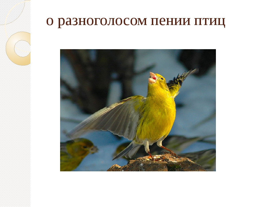 о разноголосом пении птиц
