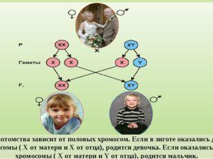 Пол потомства зависит от половых хромосом. Если в зиготе оказались две X-хром