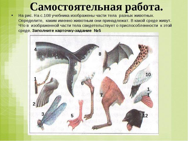 Самостоятельная работа. На рис. На с.108 учебника изображены части тела разны...