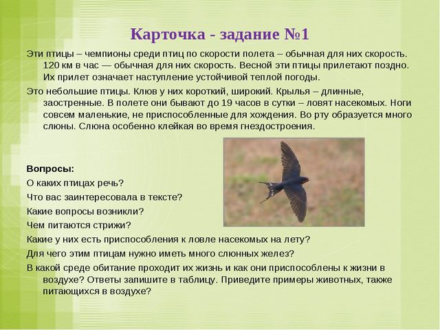 Карточка - задание №1 Эти птицы – чемпионы среди птиц по скорости полета – об...