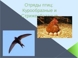 Отряды птиц: Курообразные и Стрижеобразные